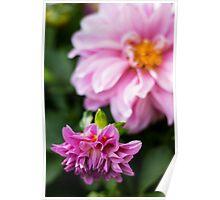 Pink Pair Poster