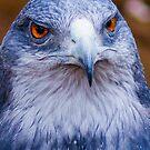 51 hawk eye by pcfyi