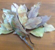 Branch of leaves wit leaf stalk by Frankmurray