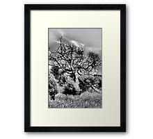 Tree On A Hill Framed Print