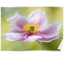 Soft Anemone Poster