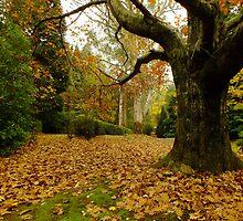 Breenhold Garden, Mount Wilson by Gabrielle  Lees