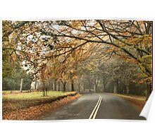Misty Avenue - Mt Wilson NSW Australia Poster