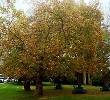 Autumn iLeaves by Eve Parry