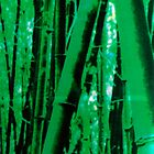 Bamboo by unavermin