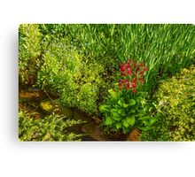 Impressions of Gardens - a Miniature Spring Creek with a Red Primrose  Canvas Print
