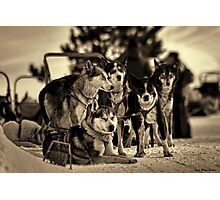DOGS FRIENDS Photographic Print