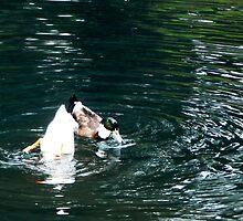 Amusing Ducks by IronHead42
