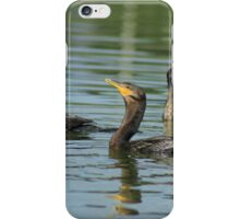 Neotropical Cormorants Swimming iPhone Case/Skin