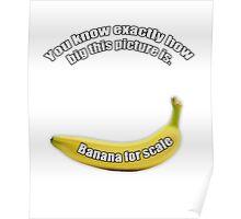Banana for scale Poster
