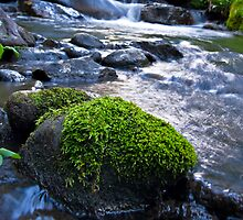 Moss Covered Rock by Michael Andersen
