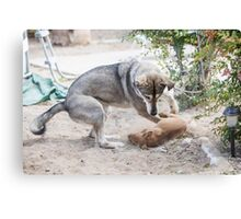A mature dog and a puppy play in the yard  Canvas Print