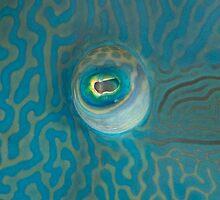 Napoleon Eye by Valerija S.  Vlasov