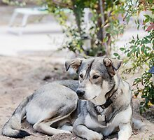A lazy dog lying in the yard by PhotoStock-Isra