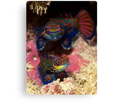 Mandarinfish Pair Canvas Print