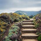 Distant Montara by Ellen Cotton