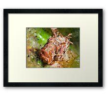 Dwarf Scorpionfish Framed Print