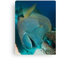 Napoleon Lipfish Canvas Print