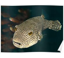 Giant Puffer Poster