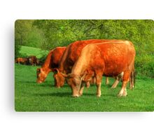 Cows - rural scene Canvas Print