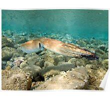 Octopus Cyaneus Poster