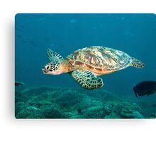 Turtle Flight Canvas Print