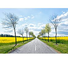 Road through the Spring fields Photographic Print