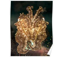 Reef Cuttlefish Poster