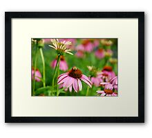 Bee on Pink Echinacea Flower Framed Print