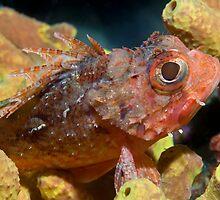 Tiny Scorpionfish by Valerija S.  Vlasov