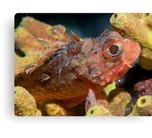 Tiny Scorpionfish Canvas Print