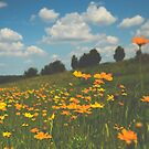 Summer Field of Wildflowers by Olivia Joy StClaire