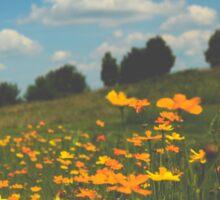 Summer Field of Wildflowers Sticker