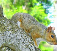 Park squirrel closeup by ♥⊱ B. Randi Bailey