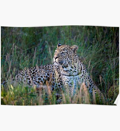 Leopard South Africa  Poster