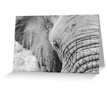 Elephant Close Up South Africa Greeting Card