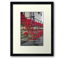 St Georges Poppies Framed Print