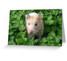Syrian Hamster In Clovers Greeting Card