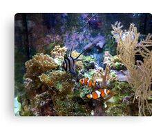 Marine Aquarium Canvas Print