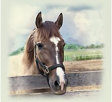 Brown Horse with Halter by Delores Knowles
