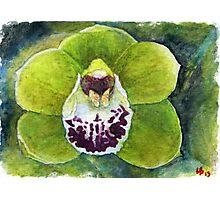 Cymbidium Orchid watercolor pencils Photographic Print