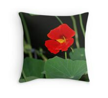 Nasturtium Cushion  Throw Pillow