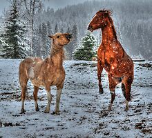 Spring Snow & Horse Play by Skye Ryan-Evans