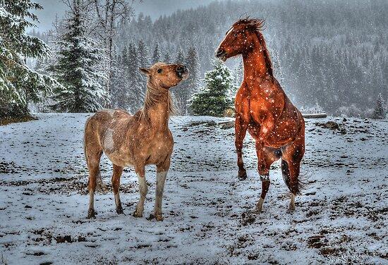 Spring Snow & Horse Play by Skye Ryan-Evans