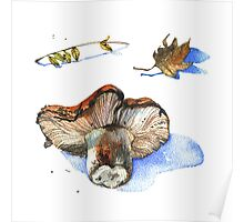 Watercolor nature collection.  Poster
