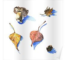 Watercolor nature collection part 2 Poster
