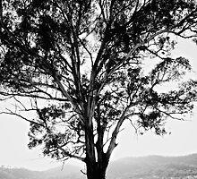 Gum Tree by D-GaP