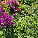 Purple Bougainvillea Greenery by daphsam