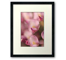 Pink Wisteria Framed Print