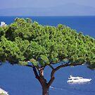 Single Tree Ocean View by daphsam